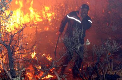 حرائق الغابات في الجزائر.. تجارة الفحم تنتعش قبيل عيد الأضحى