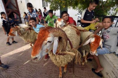 عيد الأضحى.. جزائريون تنازلوا عن شراء الأضحية رغم انخفاض أسعارها