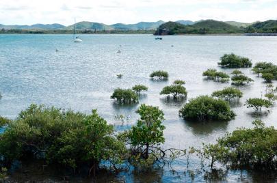 جزائريو كاليدونيا الجديدة.. حنين من وراء البحار