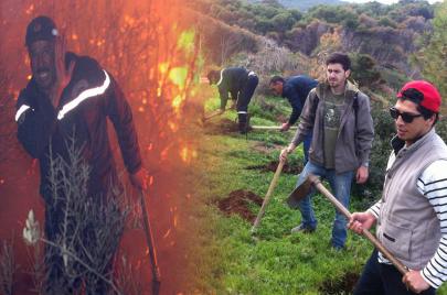 مبادرة 40 مليون شجرة.. حَراك أخضر ضدّ عصابات الفحم والعقّار