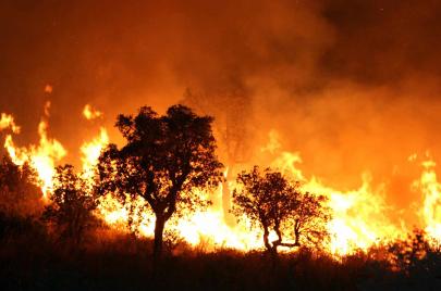 إيداع 8 موقوفين بتيزي وزو الحبس المؤقت بتهمة إضرام النار في الغابات