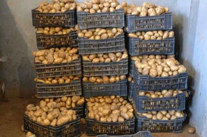 كورونا.. نقاط لبيع البطاطا في ثلاث ولايات كسرًا للمضاربة
